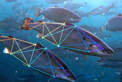 Индустрия аквакультуры: устойчивость с помощью искусственного интеллекта