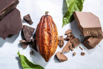 Существует угроза вырубки лесов ? Forever Chocolate на защиту леса