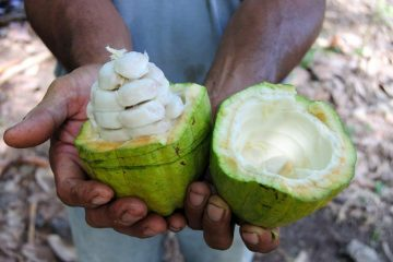 Бренд Cabosse Naturals 100% чистые ингредиенты какао-фруктов